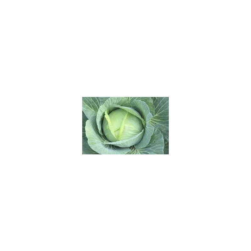 Repolho verde