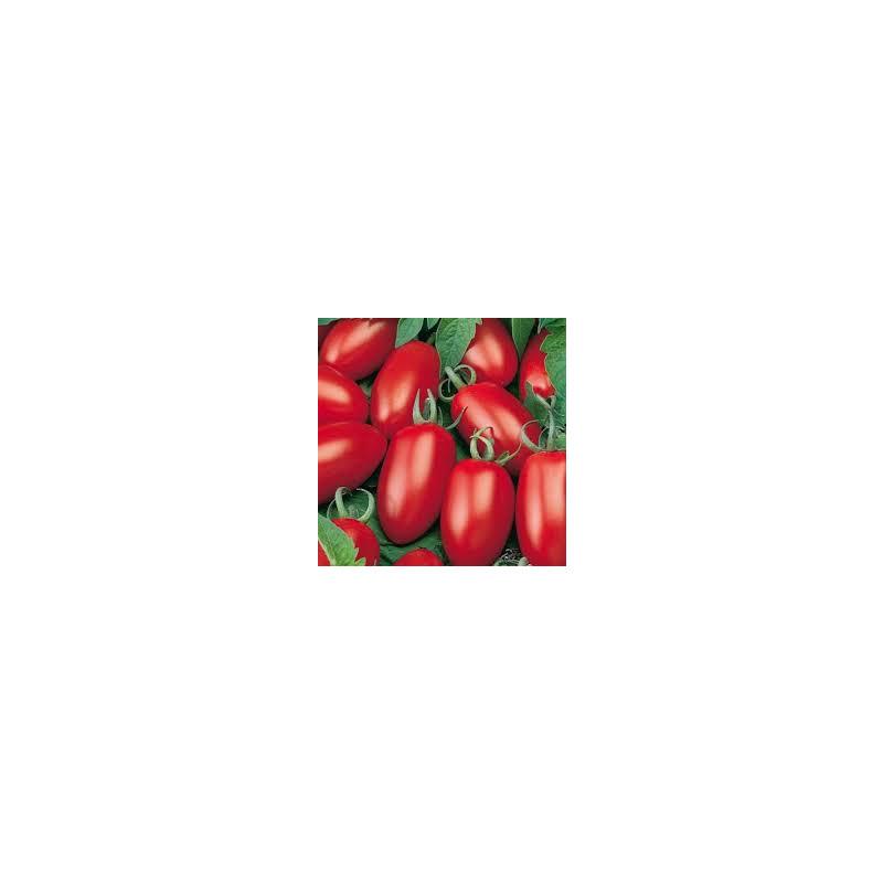 Tomate Molho