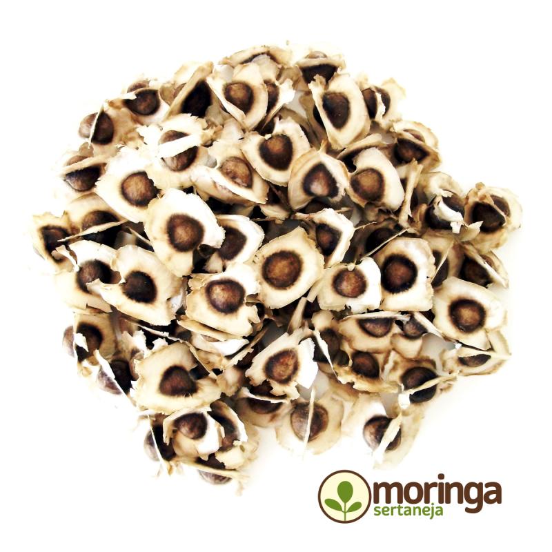 Semente de Moringa Oleifera