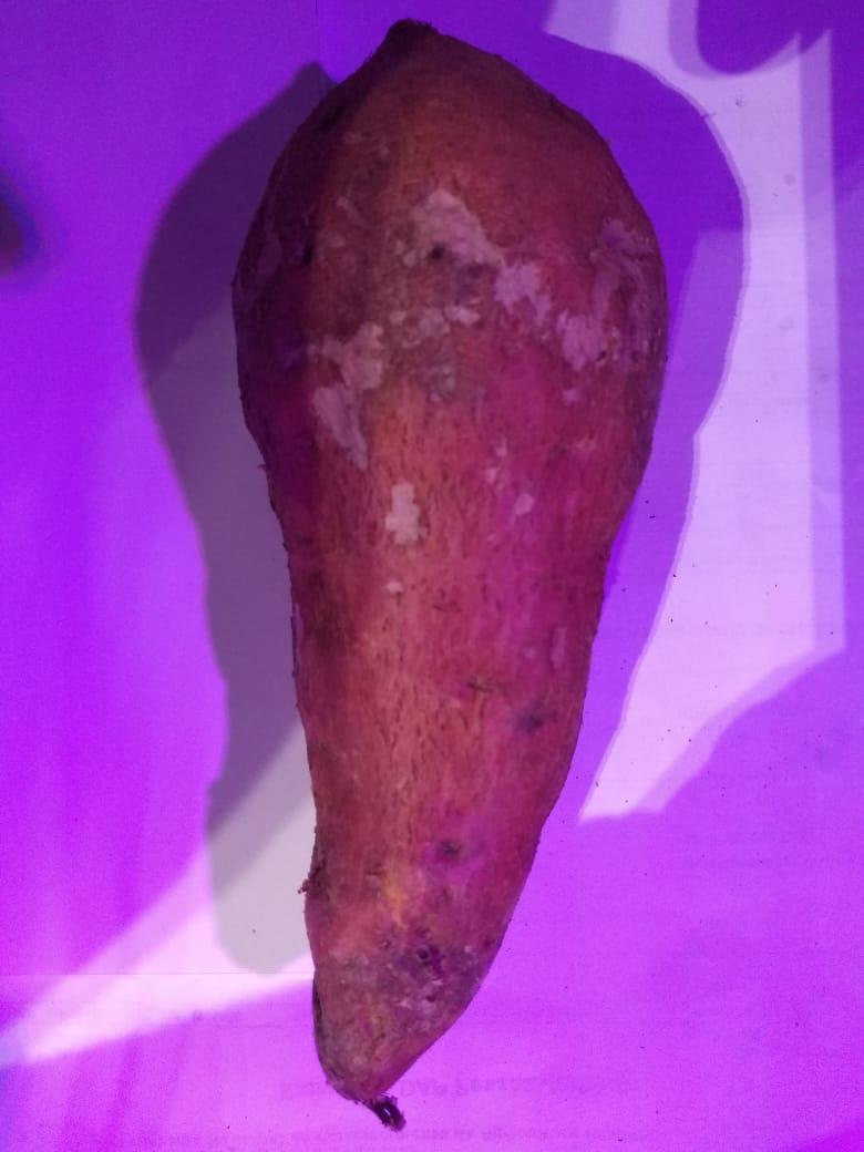 Batata Cenoura